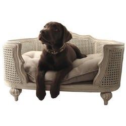 accessoires chics, tendances et glamours pour animaux de luxe