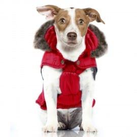Manteau Rouge à Capuche pour chien tendance