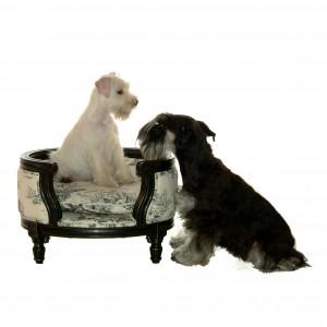 George noir et blanc et chiens